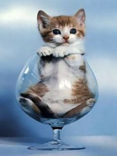 """Small foods"" does not include kittens, even when they can fit in glassware."