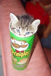 """I found this on the internet after confidently searching, """"Cat in Pringles Can"""" because I knew it had to exist in a multitude of forms. Cats, eh."""